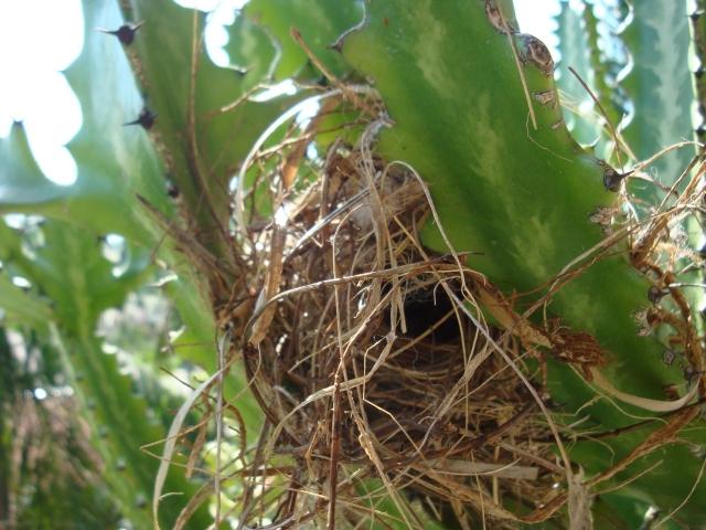 jardim de Lajeado pássaros