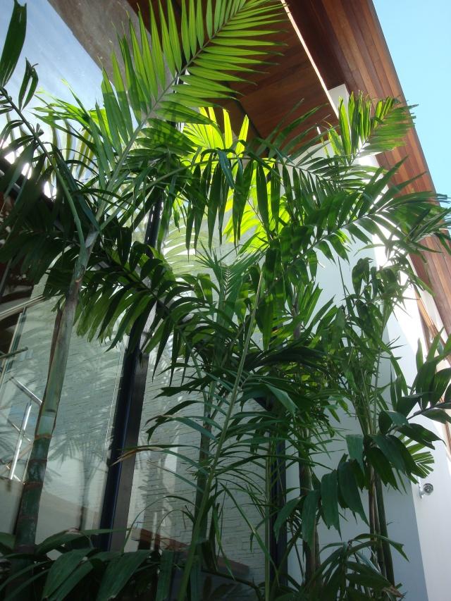 Jardim Floripa 014