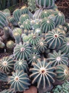 cactario 5