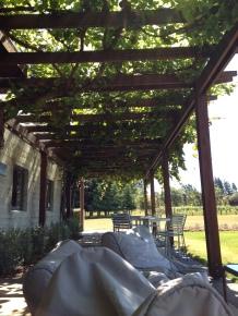 vinicola 6