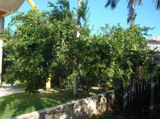 jardim Lajeado 10