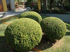 jardim Lajeado 11
