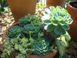 jardim Lajeado 12