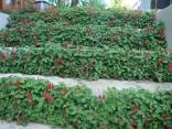 jardim-lajeado-5